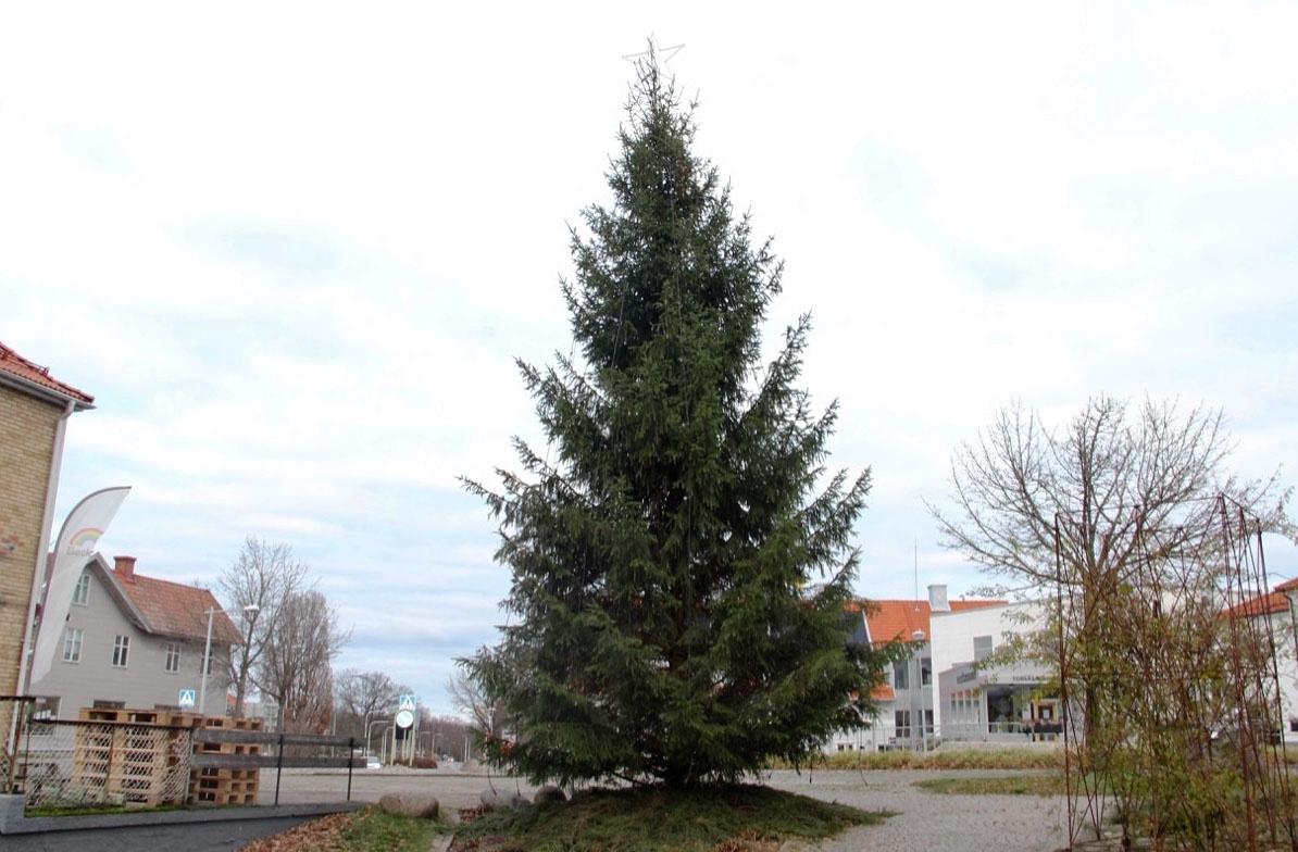 TORSÅS: Granen är skänkt av skogsägare i västra kommunen och som vill vara anonym. Som tack kommer kommunen att sätta in 1 500 kronor till Barndiabetesfonden.