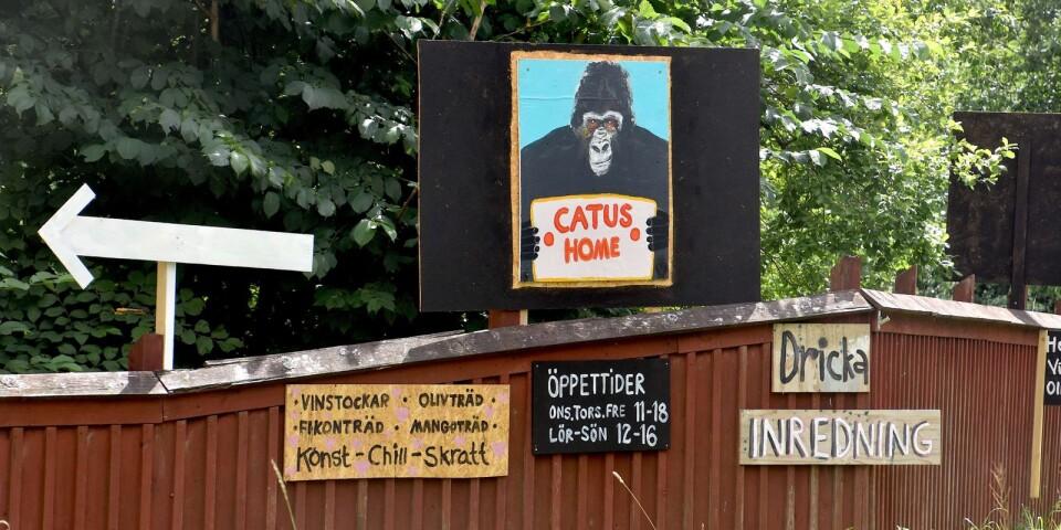Catus betyder gorilla. De handmålade skyltarna, skapade av Sofia Wibergs far, har blivit ett nytt blickfång.