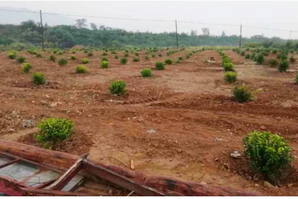 Kyrkogården planterades igen efter förstörelsen.
