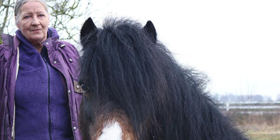 Hemma på gården i Östra Greda har hon själv några ponnyer av den irländska hästrasen.