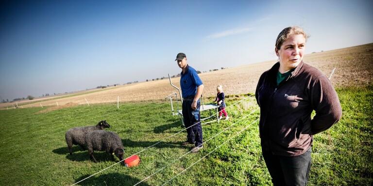 Deras lamm har fått toppbetyg – nu ska det auktioneras bort