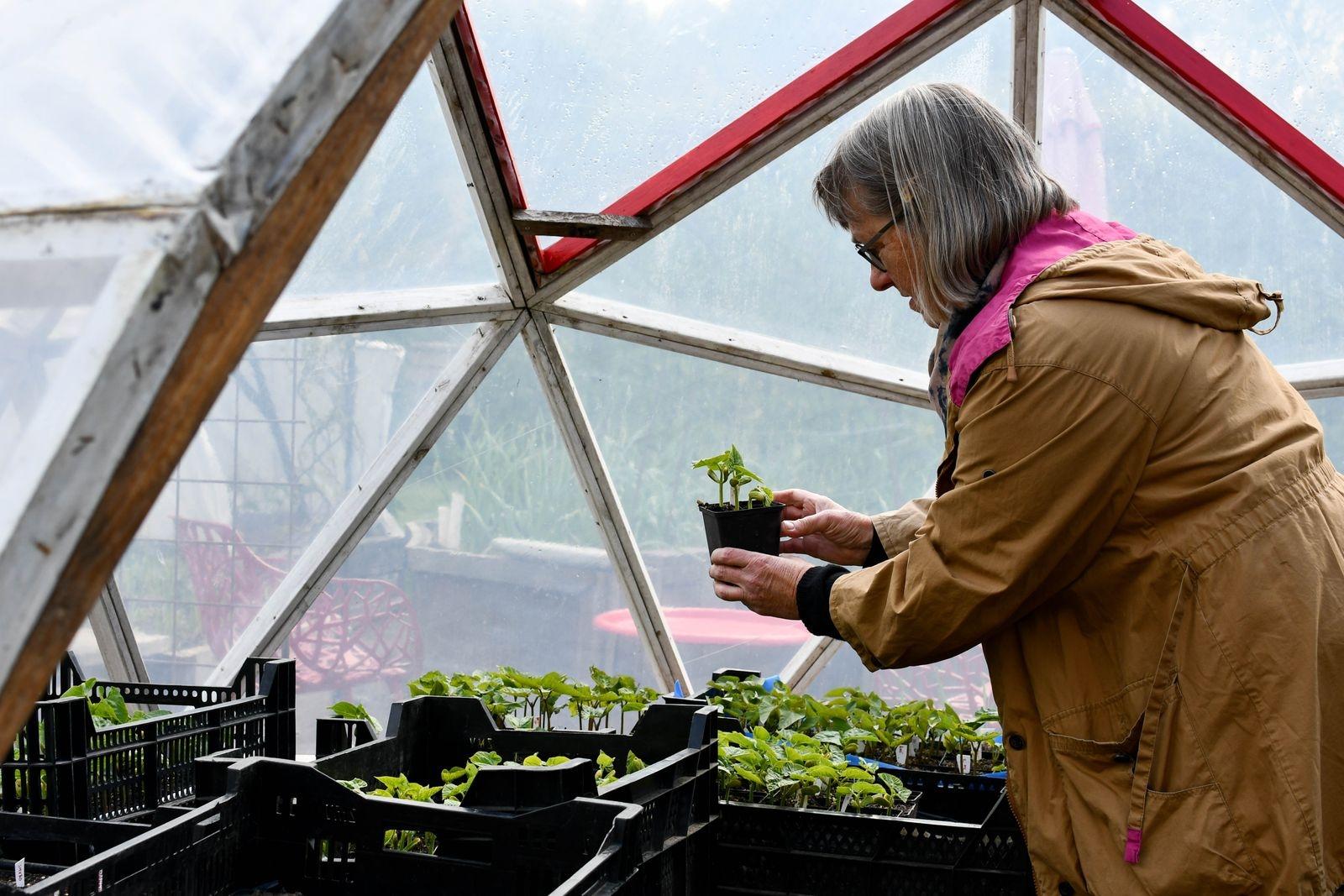 Det står redan en mindre dome i köksträdgården där Jette drivit fram bön- och ärtplantor. När de flyttar ut kommer chili och paprika att flytta in.
