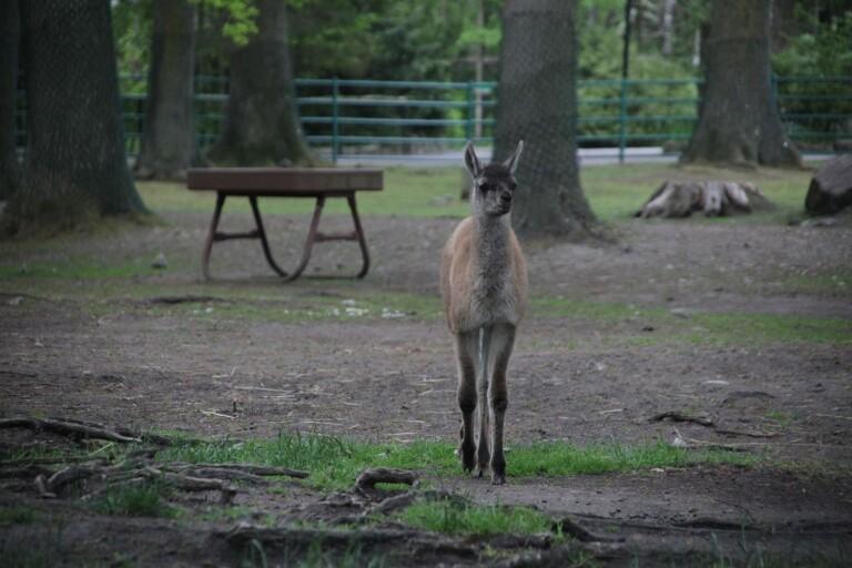 Nya attraktioner och nyfödda djur i parken