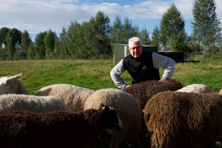 Problem med slakten bekymrar lammbönder