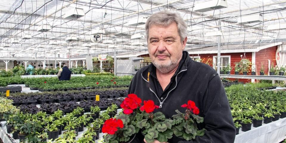 Rolf Nilsson har drivit Sölvekulle Handelsträdgård i 24 år.