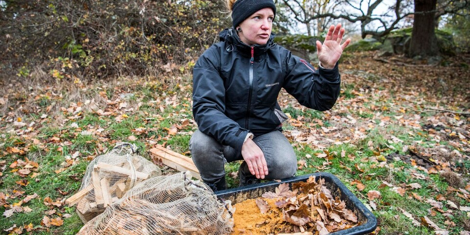Annika Lydänge från länsstyrelsen med ingredienserna till konstgjord mulm.
