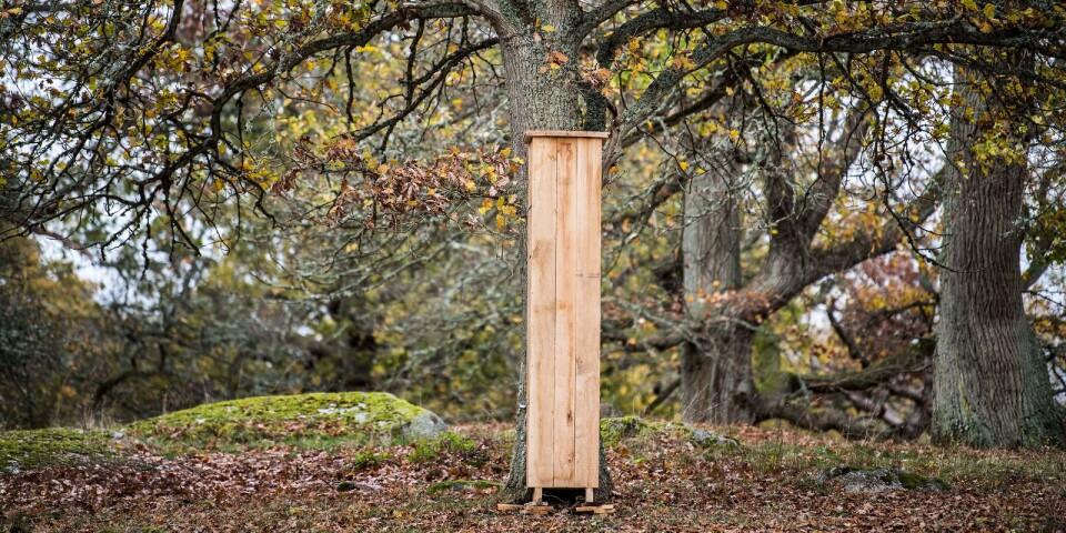 Mulmholkarna ställs mot yngre ekar. De flesta är tillverkade i furu från Svängsta, men några är gjorda i ek.