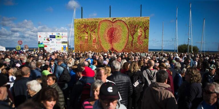 Varken marknad eller tavla – men äppelveckor i Kivik