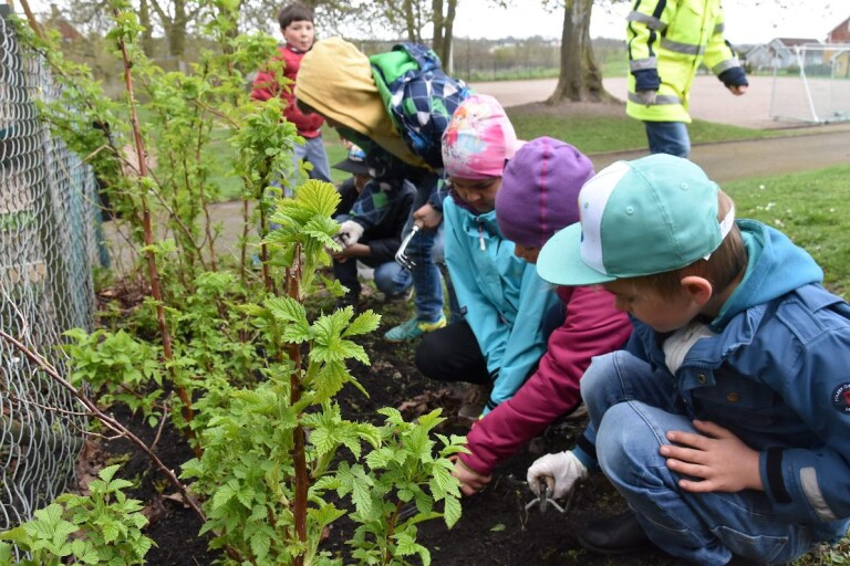 Onslundaelever gör skolgården grönare