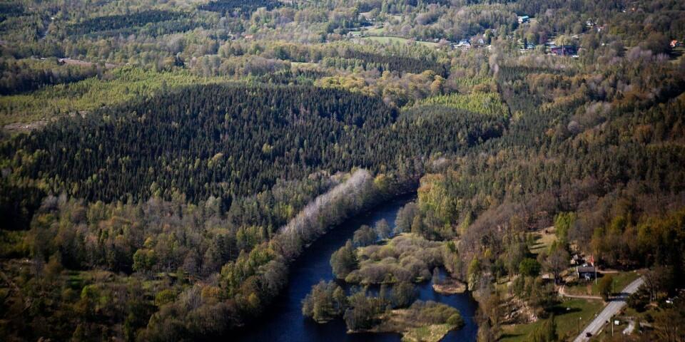 Förråden av biomassa har ökat i de svenska skogarna.