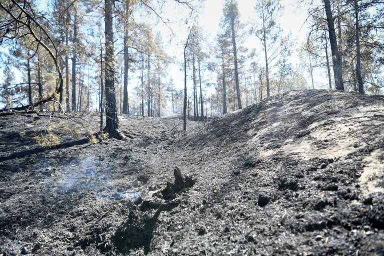 Eldade nära skog - misstänks för grov mordbrand