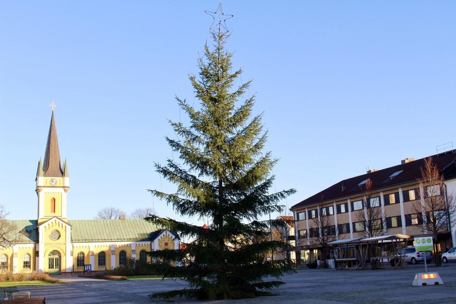 BORGHOLM: Årets gran kommer från Böda. Den har skänkts av en privatperson.