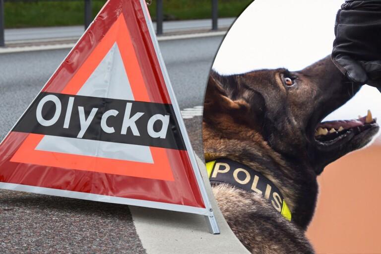 """Blodig passagerare lämnade olycksplats: """"Letade med hund"""""""