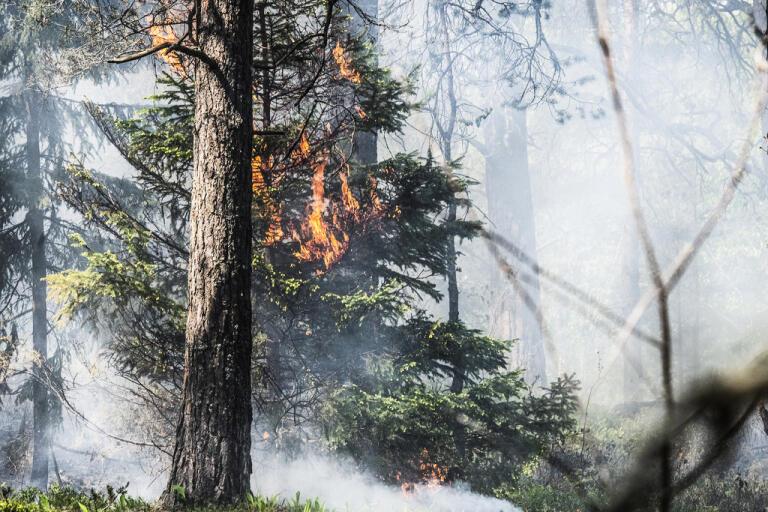 Det brann i skogen norr om Enviken i Falu kommun. Arkivbild.