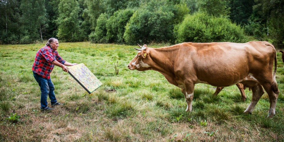 När grannes kor rymde hemifrån och tittade inom Mikko Vainios konstgalleri fick han idén om att ordna en konstrunda för djur.