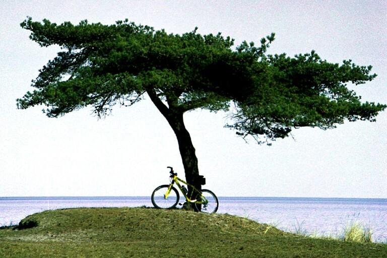 Dagar fulla av cykel