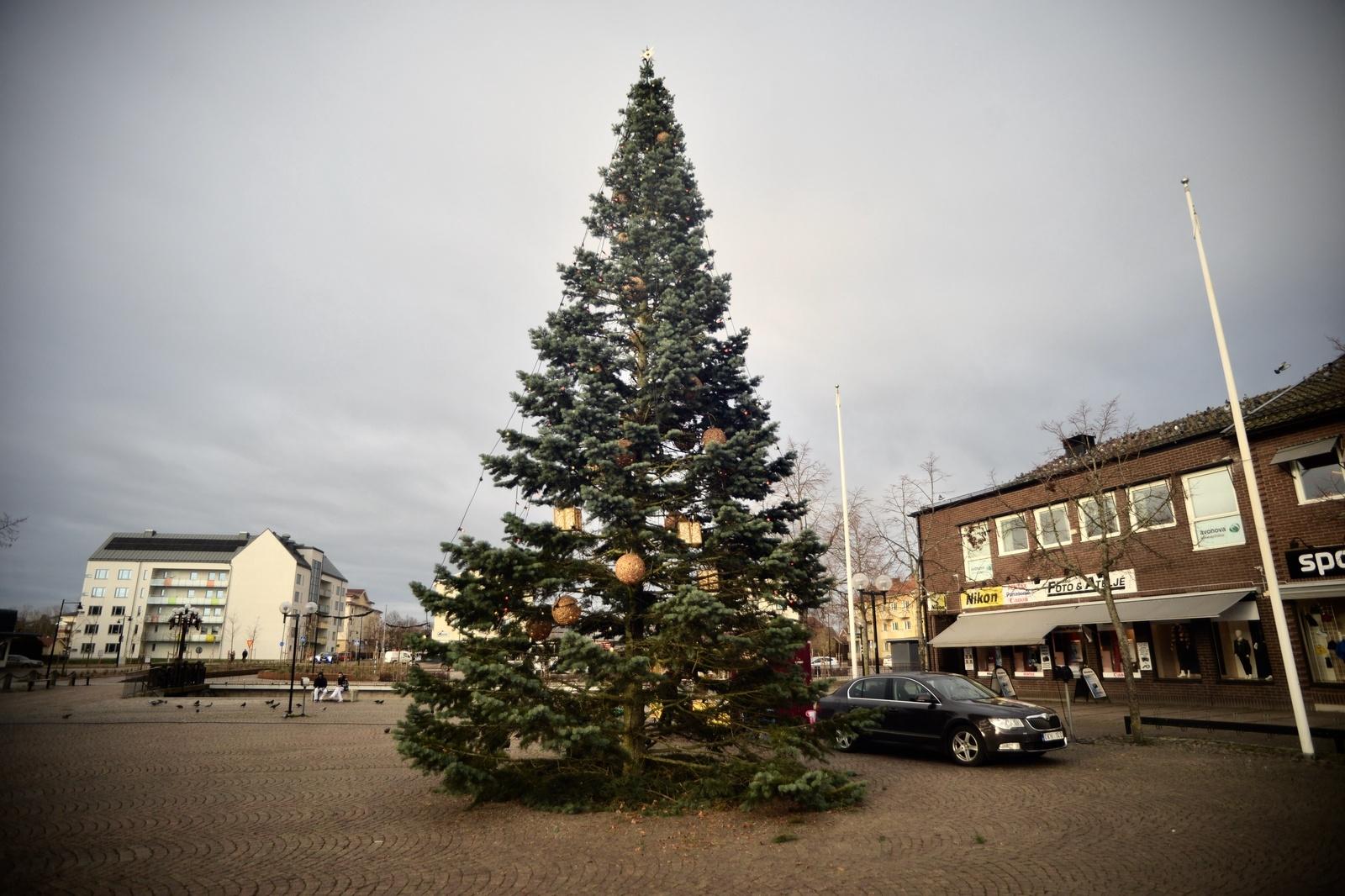 NYBRO: En ädelgran, hämtad från kommunal mark utmed Villagatan i centrala Nybro.