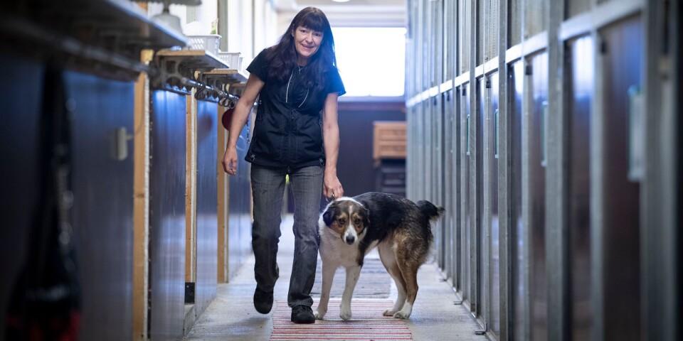 Sussie Paakkinen hoppas på några semesterhundar i och med lättade reserestriktioner.