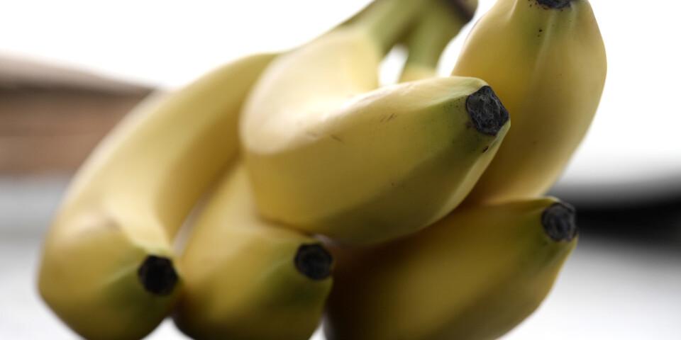Ett uppmärksammat banankonstverk, bestående av en banan som tejpats fast mot en vägg, åts upp av en besökare. Arkivbild.