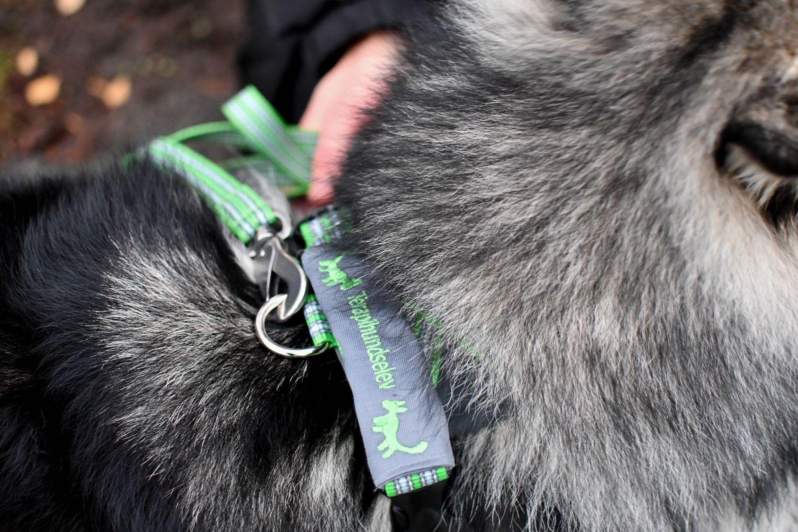 """När Eila jobbar bär hon en särskild sele märkt """"Terapihundselev""""."""
