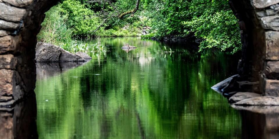 BLT:s fotograf Marcus Palmgren hittade en stenbro och ett vattendrag likt en spegel.