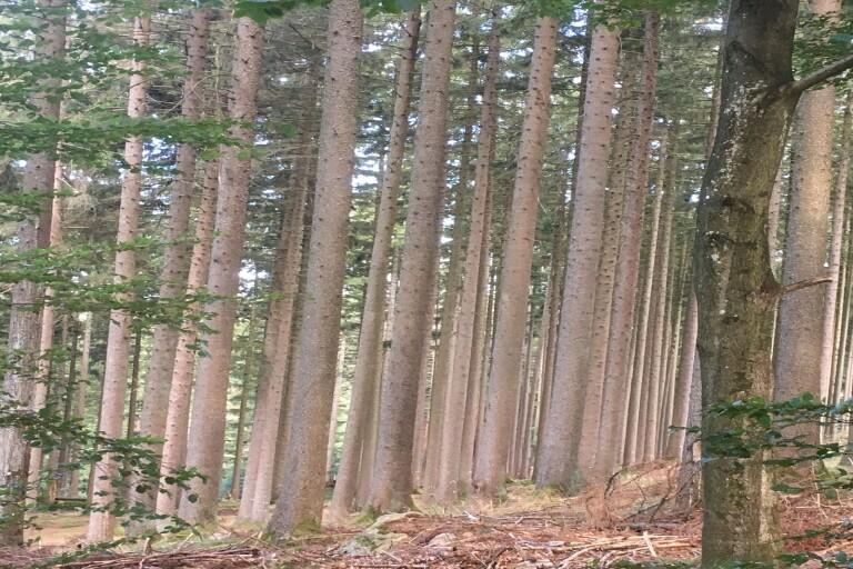 Mät skogen med mobiltelefonen
