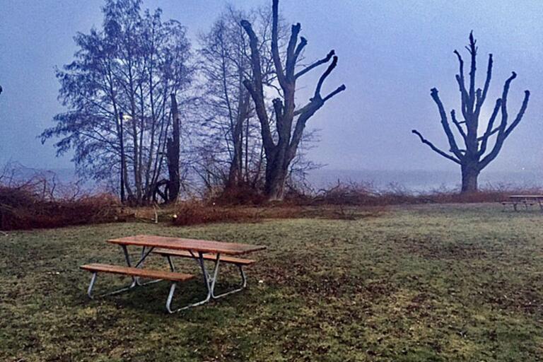 Efter fjolårets torka har många träd dött. Nu inleder Oskarshamns kommun arbetet med att ta ned döda träd.