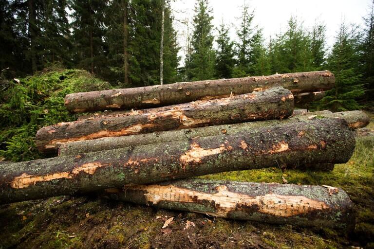 Skogsstyrelsen drar ner på servicen