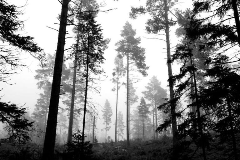 Jord och skog: Ny trädparasit upptäckt - forskare varnar