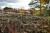 Insändarskribenten vill se en uppfräschning av lekplatsen i Figeholm.