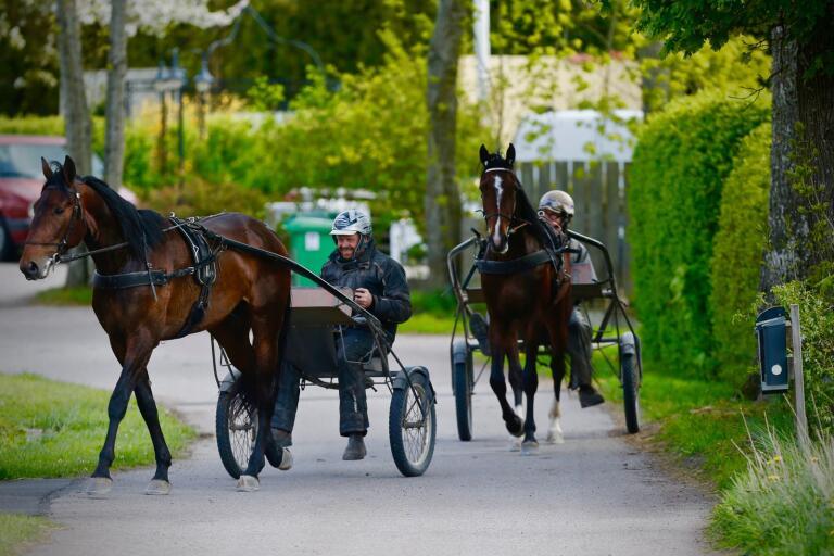 Thomas Madsen har bytt brevlåda och flyttat in på klassiska adressen Tingby 214, hästgården som tidigare ägdes av Börje BS Johansson och Catrin Fajersson.