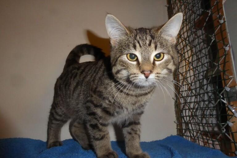 Fler övergivna katter –trots nytt regelverk