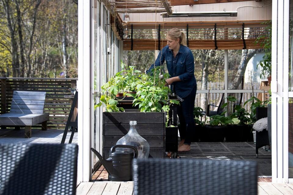 Altanen fungerar som en bra barnkammare för plantorna innan de sätts ut i köksträdgården.