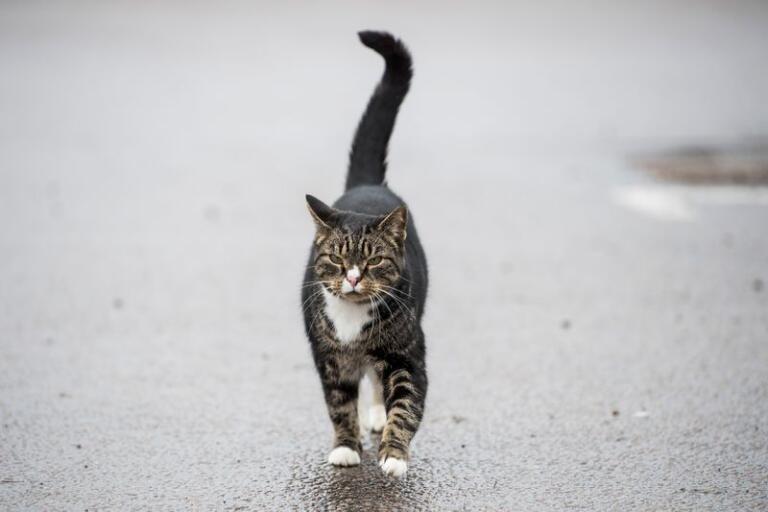 Rätt som det är kommer den vida kända katten Nemo spatserande.