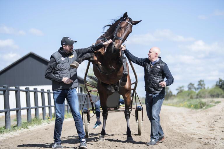 Hästen Propulsion, här flankerad av ägaren Daniel Redén och kusken Örjan Kihlström, är favorit till segern i Elitloppet 2020. Arkivbild.