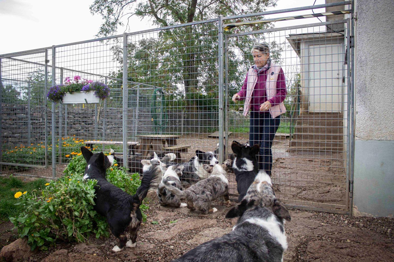 Fullt ös med åtta hundar på gården!