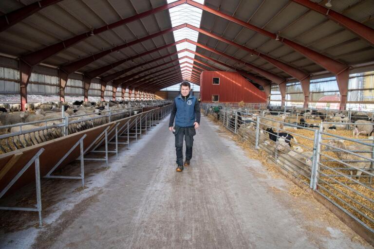 26-årige Nils Johansson har Kronobergs största lammproduktion på gården i Tveta. Han drömde och planerade länge innan han gjorde satsningen.