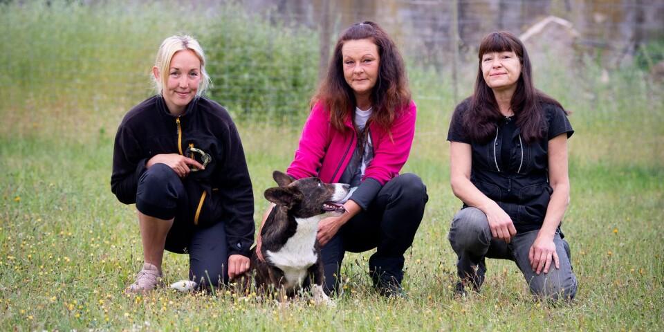 Mimi Jönsson, Vanja Andersson och Sussie Paakkinen på djurpensionatet i Gungvala.