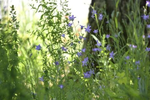 Läsartext: Behöver Göingeborna mer ängsmark?