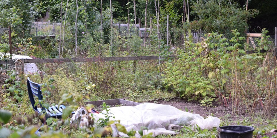 Kommunen vill se odlingslotter utan byggnader som mäter över två kvadratmeter.