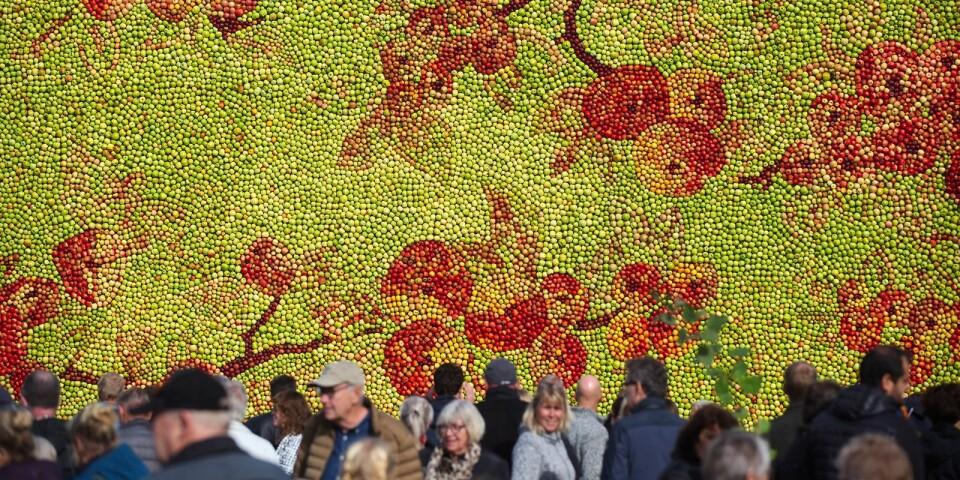 Till årets äppeltavla, den 20:e av Emma Karp Lundström, använde hon och hennes team på tolv personer, 35 000 äpplen av åtta olika sorter.