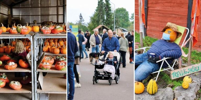 Skördefesten inställd – ändå kom tusentals till Öland