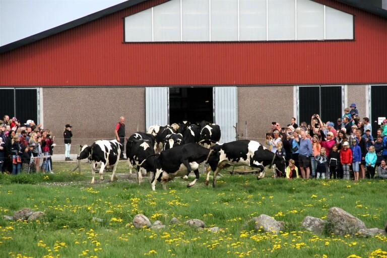 Korna sprang ut på Österbo gård