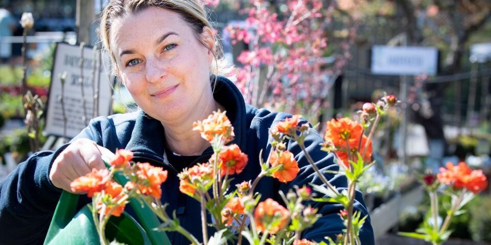 Frida Sjöholm har drivit Ljungsleds Plantskola i Mörrum i fem år. Hon berättar vilka blommor som trivs på en solig uteplats.
