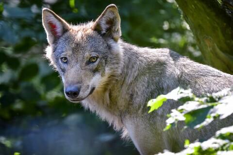 Debatt: Vi måste samexistera med de vilda arterna
