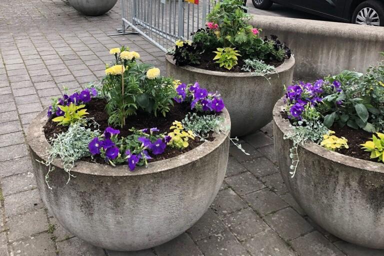Nu är blomsterkrukorna åter fyllda med färgglada blommor.