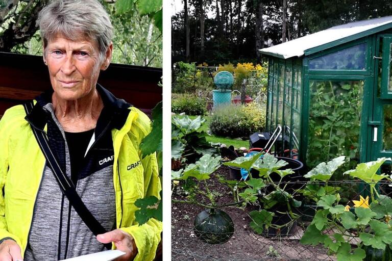 """Ilska och bedrövelse på odlingslotterna: """"Det blir slutet för mig här"""""""