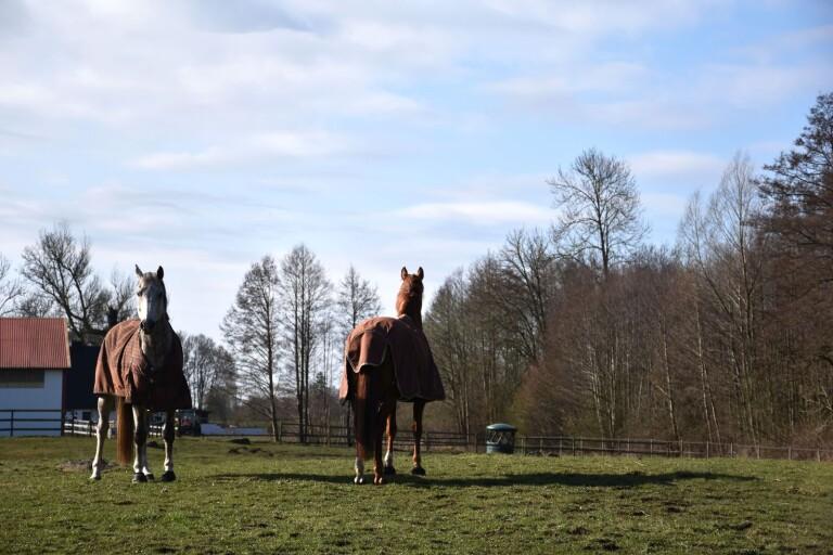 Åtta hästar och en hund utsläppta vind för våg
