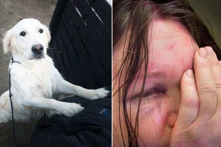 """Hunduppfödaren om det brutala rånet – """"Jag trodde att jag skulle dö"""""""