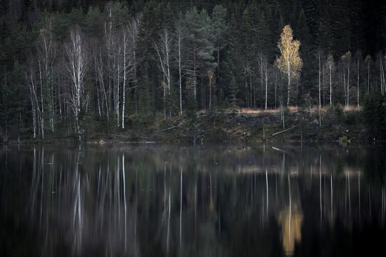 Skogsutredningen gör ingen nöjd